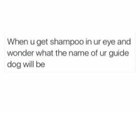 Wonder, Dog, and Eye: When u get shampoo in ur eye and  wonder what the name of ur guide  dog will be