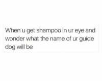 Experience, Wonder, and Dog: When u get shampoo in ur eye and  wonder what the name of ur guide  dog will be A Terrifying Experience