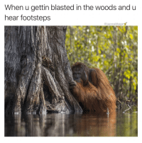 Weed, Dank Memes, and Woods: When u gettin blasted in the woods and u  hear footsteps  @jazzcabbage follow @jazzcabbage if u like with weed 👀
