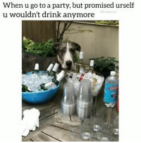 Crying, Dogs, and Drinking: When u go to a party, but promised urself  u wouldn't drink anymore  @funpawcare  VINTA Maybe just one sip. (famous last words) (VOLUME UP) 😍 😭🤣 @funpawcare . . @stella_inthecity puppylove doglover puppies puppy pupper puppers puppiesofinstagram cry crying dogstagram perro dogs dog pet pets party drink drinking funny love dogsofinstagram doggie doggies dogsitting petsitting whine howl doglove doglovers furbaby