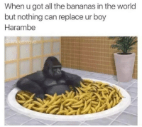 When u got all the bananas in the world  but nothing can replace ur boy  Harambe  Shlreadsteve