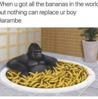 Memes, 🤖, and Rip: When u got all the bananas in the world  ut nothing can replace ur boy  Harambe  inline adsteve RIP Sweet Prince. . Merica SweetPrince Harambe
