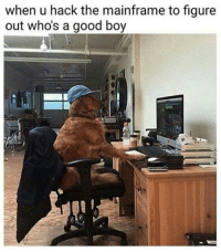 ~Dogreen: when u hack the mainframe to figure  out who's a good boy ~Dogreen