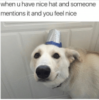 Meme, Girl Memes, and Nice: when u have nice hat and someone  mentions it and you feel nice Nice meme @mybestiesays
