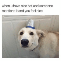 Memes, Animal, and Best: when u have nice hat and someone  mentions it and you feel nice @teamnobadtimes has the best animal memes 😩💯💕🙋🏽♀️