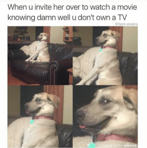 Dank, Memes, and Reddit: When u invite her over to watch a movie  knowing damn well u don't own a TV  @tank.sinatra  MADE WITH MOMUS And you only have a couch by HannibalGoddamnit FOLLOW 4 MORE MEMES.