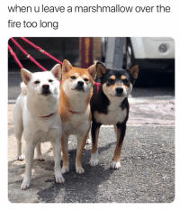 Fire, Memes, and 🤖: when u leave a marshmallow over the  fire too long toasty bois 🔥