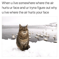 I can't feel my face when I'm with @tank.sinatra 😼 caturday: When u live somewhere where the air  hurts ur face and ur tryna figure out why  u live where the air hurts your face I can't feel my face when I'm with @tank.sinatra 😼 caturday