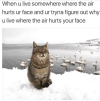 Live, Toronto, and Girl Memes: When u live somewhere where the air  hurts ur face and ur tryna figure out why  u live where the air hurts your face But why tho cc: Toronto