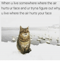 Memes, Live, and 🤖: When u live somewhere where the air  hurts ur face and ur tryna figure out why  u live where the air hurts your face It's facking freezing 😾 goodgirlwithbadthoughts 💅🏼