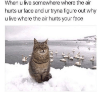Memes, Live, and 🤖: When u live somewhere where the air  hurts ur face and ur tryna figure out why  u live where the air hurts your face About right