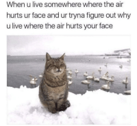 Memes, Reddit, and Tumblr: When u live somewhere where the air  hurts ur face and ur tryna figure out why  u live where the air hurts your face memecage:  I hate living in Iceland