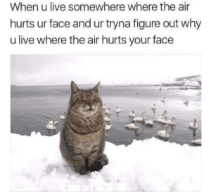 Memes, Iceland, and Live: When u live somewhere where the air  hurts ur face and ur tryna figure out why  u live where the air hurts your face I hate living in Iceland via /r/memes https://ift.tt/2JxZYM9