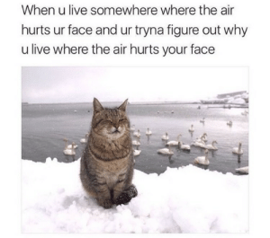 Live, Air, and Why: When u live somewhere where the air  hurts ur face and ur tryna figure out why  u live where the air hurts your face
