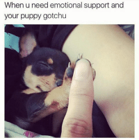 Fuggin hysterical 😂😂🐶: When u need emotional support and  your puppy gotchu Fuggin hysterical 😂😂🐶