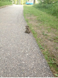 Relatable, Wanted, and Amp: When u realize u don't want 2 be responsible for anything anymore & u just want 2 nap and be small https://t.co/2plhRSf9fu