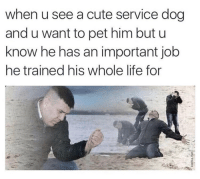 The pain is real: when u see a cute service dog  and u want to pet him but u  know he has an important job  he trained his whole life for The pain is real