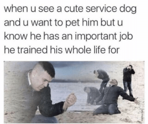 Cute, Life, and Guess: when u see a cute service dog  and u want to pet him but u  know he has an important job  he trained his whole life for Well, guess I can't.