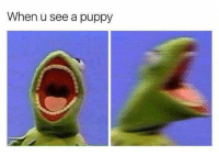 Dogs are cute meme dog doggo doge kermit the frog screams funny puppy puppies likeforlike followforfollow: When u see a puppy Dogs are cute meme dog doggo doge kermit the frog screams funny puppy puppies likeforlike followforfollow