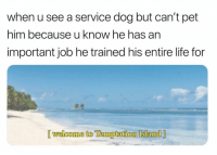 Funny, Life, and Usa: when u see a service dog but can't pet  him because u know he has an  important job he trained his entire life for  [ welcome to Temmptation Island] Tonight I will be watching @temptationtv on @USA_Network at 10-9c because it literally looks like the most intense show ever! TemptationIsland AD