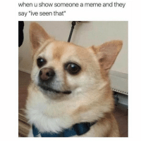 "Friends, Meme, and Memes: when u show someone a meme and they  say ""ive seen that"" true friends laugh at memes whether old or new @iamathicchotdog"