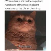 Shit, Watch, and Creatures: When u take a shit on the carpet and  watch one of the most intelligent  creatures on the planet clean it up  Pathetic