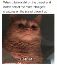Clean it, peasant: When u take a shit on the carpet and  watch one of the most intelligent  creatures on the planet clean it up  Pathetic Clean it, peasant