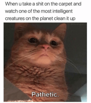 Clean it, peasant by BulGAYrian1 MORE MEMES: When u take a shit on the carpet and  watch one of the most intelligent  creatures on the planet clean it up  Pathetic Clean it, peasant by BulGAYrian1 MORE MEMES