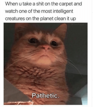 My cat thinks like this: When u take a shit on the carpet and  watch one of the most intelligent  creatures on the planet clean it up  PMesP  Pathetic. My cat thinks like this