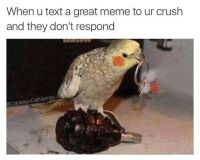 It was swell knowin ya: When u text a great meme to ur crush  and they don't respond  @Cabbage CatMemes It was swell knowin ya