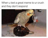 Crush, Meme, and Text: When u text a great meme to ur crush  and they don't respond  @CabbageCatMemes