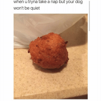 Memes, 🤖, and Dog: when u tryna take a nap but your dog  won't be quiet it's a hush puppy ahaha