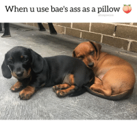 Guilty ass napper. Who else does this? 😂 ❤️ @funpawcare . . @zorroandnapoleon peach ass bae pillow cuddle weinerdog wienerdog dachshund dachshundsofinstagram dachshundpuppy puppylove doglover puppies puppy puppiesofinstagram dogstagram dogs dog socute cute adorable love dogsofinstagram newpuppy newdog doglove doglovers furbaby lovethesedogs lovethis: When u use bae's ass as a pillow  @funpawcare Guilty ass napper. Who else does this? 😂 ❤️ @funpawcare . . @zorroandnapoleon peach ass bae pillow cuddle weinerdog wienerdog dachshund dachshundsofinstagram dachshundpuppy puppylove doglover puppies puppy puppiesofinstagram dogstagram dogs dog socute cute adorable love dogsofinstagram newpuppy newdog doglove doglovers furbaby lovethesedogs lovethis