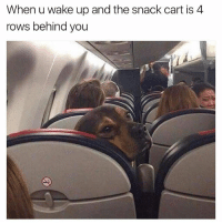 I always tell the stewardesses to wake me up for snacks and such, if I'm sleeping. I be mad asf if I don't get my Ginger ale. 😂😂😂😂😂😂 @davie_dave: When u wake up and the snack cart is 4  rows behind you I always tell the stewardesses to wake me up for snacks and such, if I'm sleeping. I be mad asf if I don't get my Ginger ale. 😂😂😂😂😂😂 @davie_dave