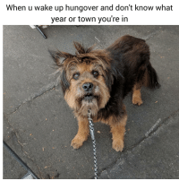 9gag, Animals, and Dogs: When u wake up hungover and don't know what  year or town you're in Welcome to the future Pupper 😍 😍 @funpawcare . . New link in bio updated often with all of our expert recommended Dog Training, Behavior, Nutrition, & Pet Care products. Recommended by experts, for parents! dogtraining puppylove doglover puppies puppy pupper puppers puppiesofinstagram dogstagram dogs dog pet pets lol memes meme funny love dogsofinstagram doggie doggo 9gag buzzfeed newpuppy newdog doglove doglovers furbaby instagram instadaily @9gag @barked @buzzfeed @buzzfeedanimals @ladbible @unilad @theellenshow @barstoolsports @cbsla @lnsta_dogs @dogsofinstagram @instagram @dogsbeingbasic @dogs @failsclip @funnyfailvideos @fun_bestvids @lol_vines @bestvidsnow @failsvids @animals.co @thedodo @boopmynose @dogsofinstaworld @pups @pawz @puppystagrams @animal_unity @dogs.lovers @animalove.co @cutepetclub @puppyscene @campingwithdogs @bestvinesnow @pupflix