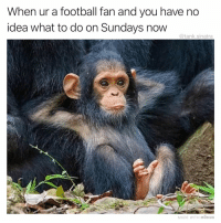 Football, Funny, and Idea: When ur a football fan and you have no  idea what to do on Sundays now  @tank.sinatra  MADE WITH MOMUS Literally anything