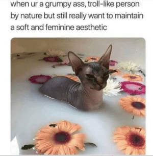 meirl: when ur a grumpy ass, troll-like person  by nature but still really want to maintain  a soft and feminine aesthetic meirl