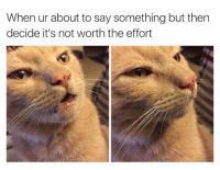 Cute, Memes, and 🤖: When ur about to say something but then  decide it's not worth the effort For more cute pics LIKE us at The Purrfect Feline Page