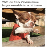 Dogs, Funny, and Memes: When ur at a BBQ and you see more  burgers are ready but ur too full to move I can has cheezburger? Peas? #dogs # funny dogs # dog memes # funny memes # animal memes # cheezburger memes