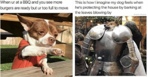 Delivery! Fresh hot doggo memes at your service!#dogmemes #funnydogs #funnymemes #animalmemes #cutedogs #: When ur at a BBQ and you see more  This is how I imagine my dog feels when  he's protecting the house by barking at  the leaves blowing by  burgers are ready but ur too full to move  tank sinatra Delivery! Fresh hot doggo memes at your service!#dogmemes #funnydogs #funnymemes #animalmemes #cutedogs #