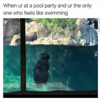Memes, Party, and Pool: When ur at a pool party and ur the only  one who feels like swimming We've all been there (@tank.sinatra)