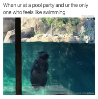 Oh you're too cool to swim?: When ur at a pool party and ur the only  one who feels like swimming  @tank.sinatra  MADE WITH MOMUS Oh you're too cool to swim?