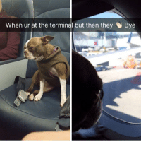 woof irl: When ur at the terminal but then they Bye woof irl