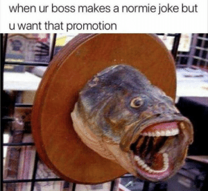 Laughs in Chandler Bing!!! by Ipu17 MORE MEMES: when ur boss makes a normie joke but  u want that promotion Laughs in Chandler Bing!!! by Ipu17 MORE MEMES