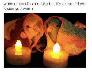 Fake, Love, and Winter: when ur candles are fake but it's ok bc ur love  keeps you warm My lovebirds on a winter evening. via /r/wholesomememes https://ift.tt/2Mhv7HS
