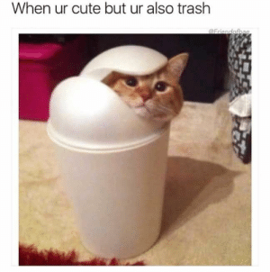 Cute, Funny, and Trash: When ur cute but ur also trash Latest 24 Funny Animal Pictures You Need to See Today - JustViral.Net