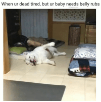 What my baby needs, my baby gets ❤️ Tag your friends that would do this. 😍 @funpawcare . . 📹 @ichigoburuta bellyrubs englishbulldog puppylove doglover puppies puppy pupper puppers puppiesofinstagram dogstagram perro adopt rescue adoptdontshop foster vegan plantbased dogs dog pet pets funny love dogsofinstagram doggie doggies doggy doglove doglovers furbaby: When ur dead tired, but ur baby needs belly rubs What my baby needs, my baby gets ❤️ Tag your friends that would do this. 😍 @funpawcare . . 📹 @ichigoburuta bellyrubs englishbulldog puppylove doglover puppies puppy pupper puppers puppiesofinstagram dogstagram perro adopt rescue adoptdontshop foster vegan plantbased dogs dog pet pets funny love dogsofinstagram doggie doggies doggy doglove doglovers furbaby