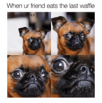 Memes, Brussel Sprouts, and Sprouts: When ur friend eats the last waffle  @brussels sprout friendship terminated . @brussels.sprout