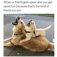 Memes, 🤖, and Tank: When ur friend gets upset and you get  upset too because that's the kind of  friend you are  Tank Sinatra https://t.co/C3KveCYu3P