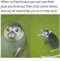 Punk ass neighbors 😂😂: When ur friend says you can use their  pool any time but then they come home  and act all weird that you're in their pool Punk ass neighbors 😂😂
